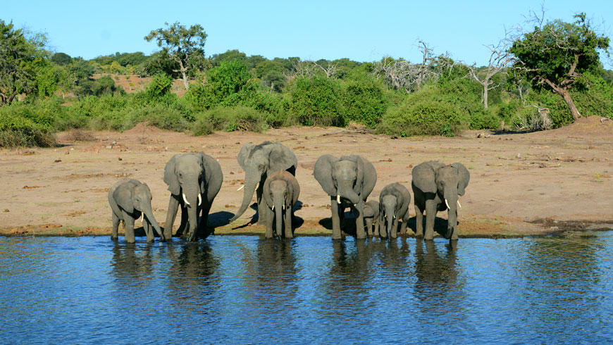 2_CHOBE_ELEPHANTS
